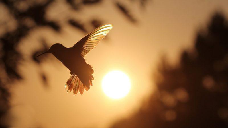 kolibri in der sonne