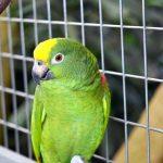 papagai mit ast