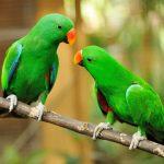 papagaien