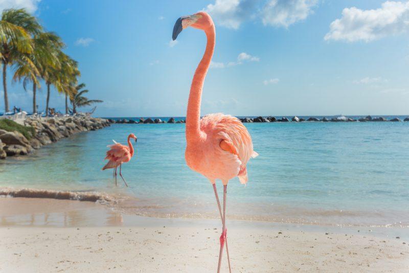flamingo am strand
