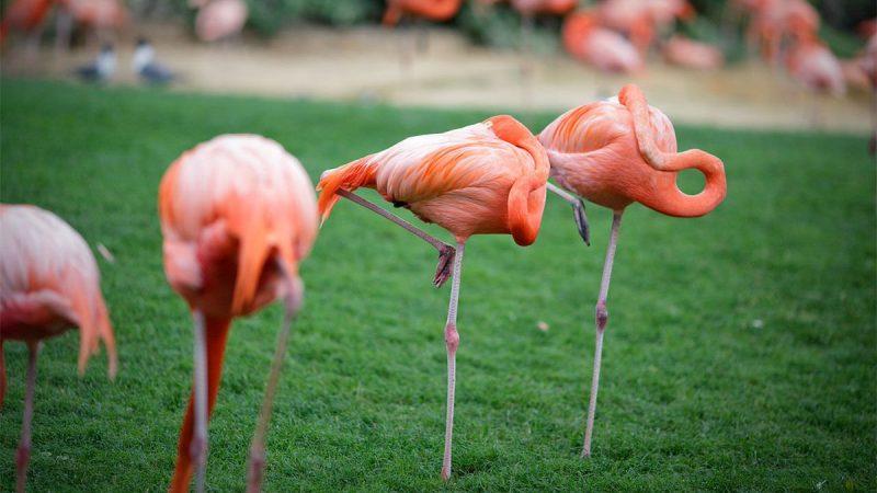 flamingo auf einen bein