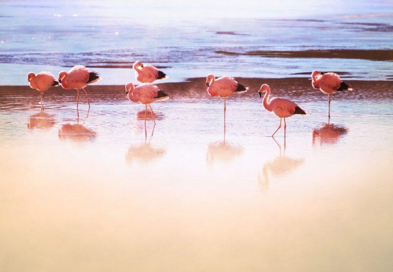 flamingos am see