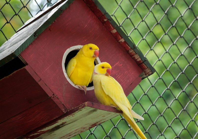 Kanarienvogel 3